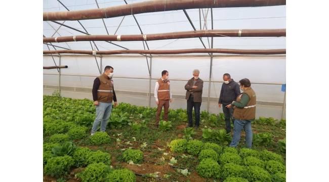 Alaşehir'de seracılık gelişiyor