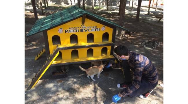 Amasya Belediyesi'nden sokak kedilerine özel kedievi