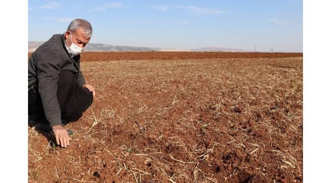 Araban ovasında makarnalık sert buğday ekimine başlandı