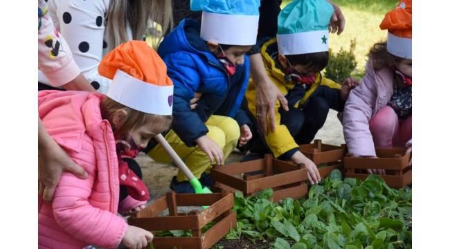 Bahçede ürün yetiştiren minikler hasatlarını da kendileri yaptı