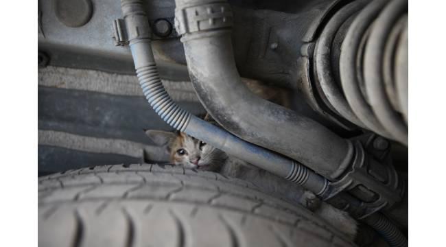 Kaputa giren yavru kediler itfaiye ekiplerince kurtarıldı
