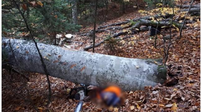 Kestiği ağacın altında kalan kişi hayatını kaybetti