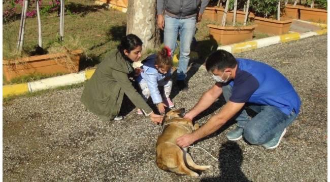 Küçük Almira, kendisini ısıran sokak köpeğini sevdi