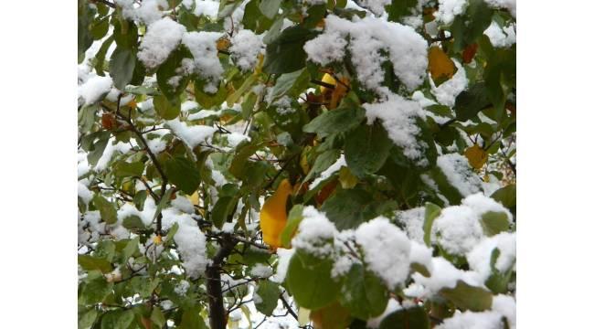 Posof güne karla uyandı
