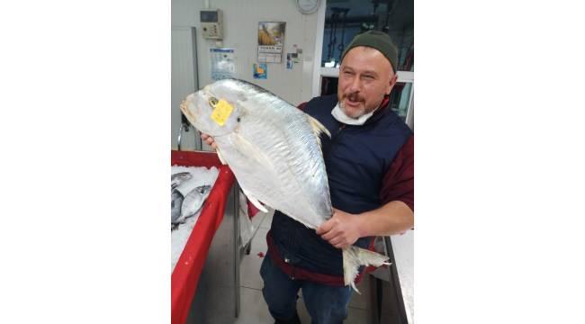 Sinop'ta yakalanan dev İskender balığı görenleri şaşkına cevirdi