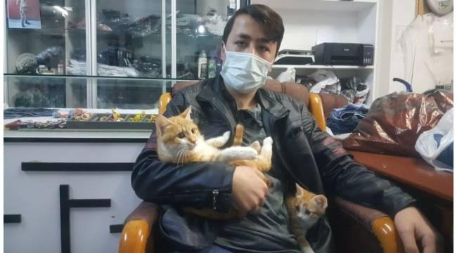Yaralı kedinin tedavisi için dürümcüde çalıştı