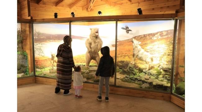 Yenice ormanlarının yaban hayatını müzede keşfediyorlar