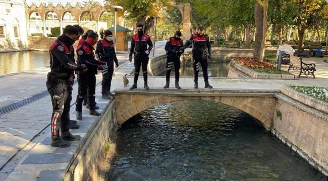 Balıklıgöl'deki balıkları polisler besledi
