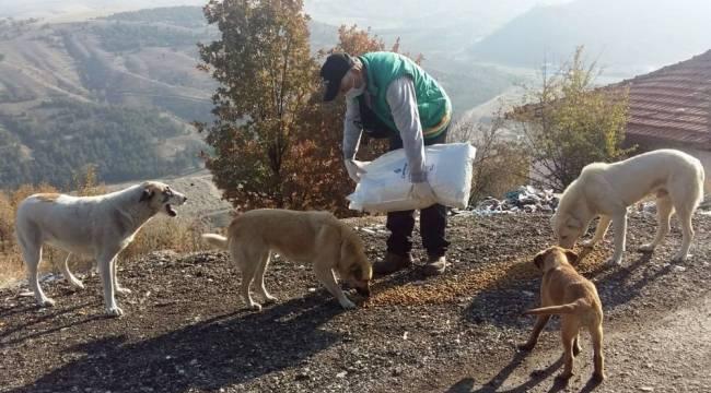 Çankaya Belediyesi 56 saatlik kısıtlamada sokak hayvanlarını unutmadı
