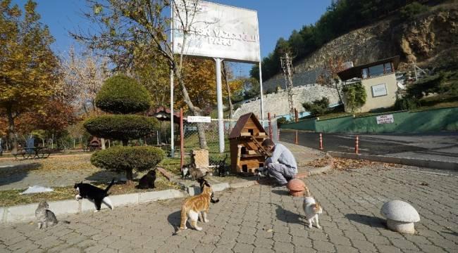 Kısıtlamada sokak hayvanlarına mama desteği