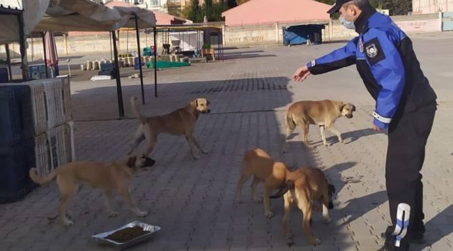 Kızıltepe Belediyesi sokak hayvanlarını unutmadı