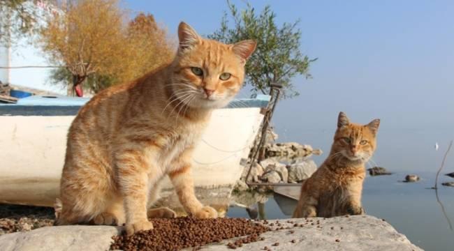 Nilüfer'de sokak hayvanları yalnız değil