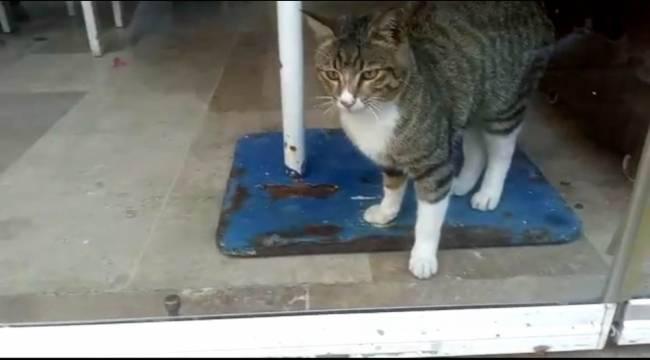Restoranda mahsur kalan kediyi kapı altından beslediler