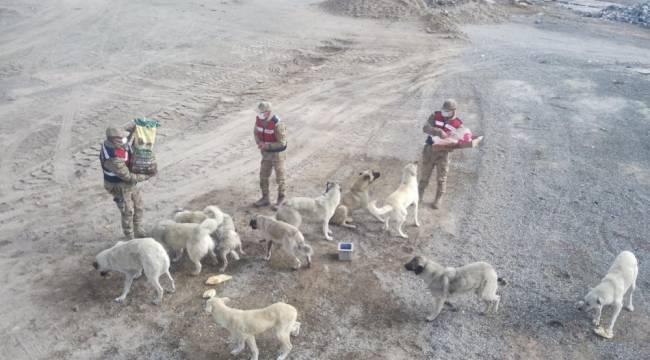 Sarıkamış'ta kısmen boşaltılan köyde sahipsiz köpeklere jandarma sahip çıktı
