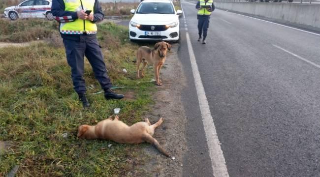 Yaralı köpeğe jandarma ekipleri sahip çıktı