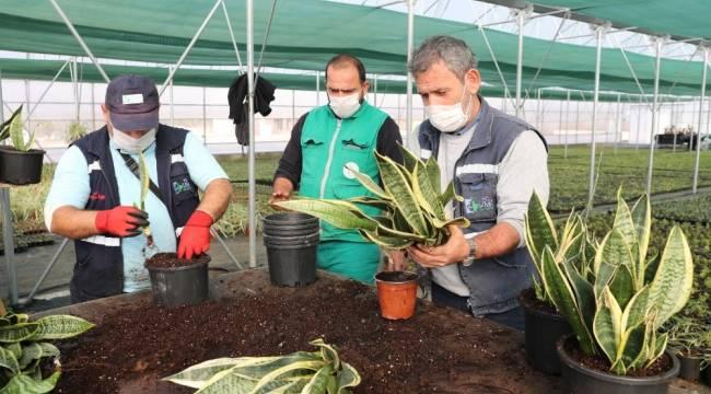 Yaşam Bahçesi'ndeki bitkilerin üretimi başladı