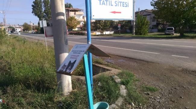 Zor günlerde sokak hayvanları Süleymanpaşa Belediyesine emanet